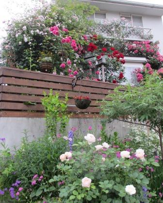 雨降り前の庭のお花たち_a0243064_19590565.jpg