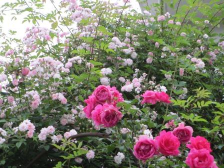 雨降り前の庭のお花たち_a0243064_19592006.jpg