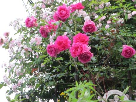 雨降り前の庭のお花たち_a0243064_20034849.jpg