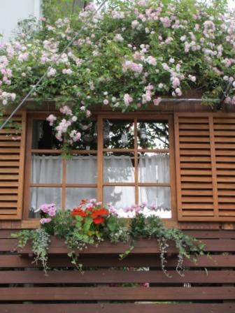 雨降り前の庭のお花たち_a0243064_20051945.jpg