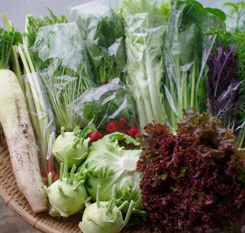 今週の野菜セット(5/27~5/31着)_c0110869_1457228.jpg