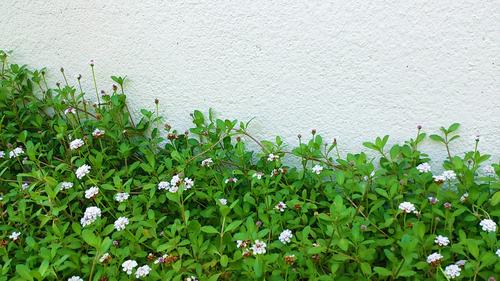 春のしずくギャラリー、愛しい花々。_b0240382_1311963.jpg
