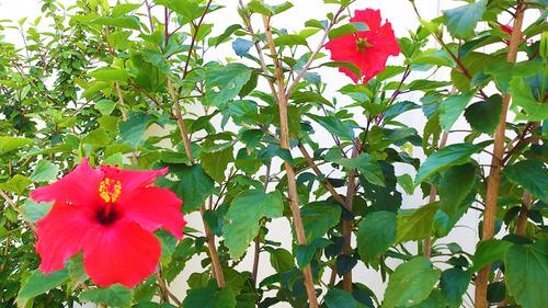 春のしずくギャラリー、愛しい花々。_b0240382_13132063.jpg