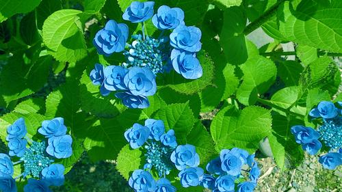 春のしずくギャラリー、愛しい花々。_b0240382_13152745.jpg