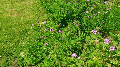春のしずくギャラリー、愛しい花々。_b0240382_13203896.jpg