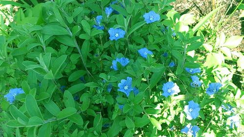 春のしずくギャラリー、愛しい花々。_b0240382_13234345.jpg