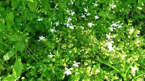 春のしずくギャラリー、愛しい花々。_b0240382_13281022.jpg