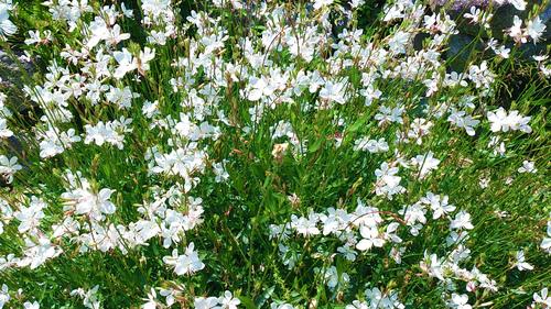 春のしずくギャラリー、愛しい花々。_b0240382_1385528.jpg