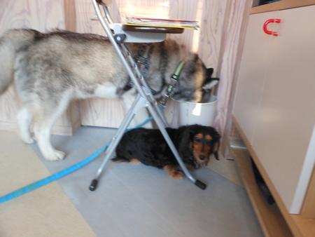 「犬、猫しつけ条例」_b0186183_1641437.jpg