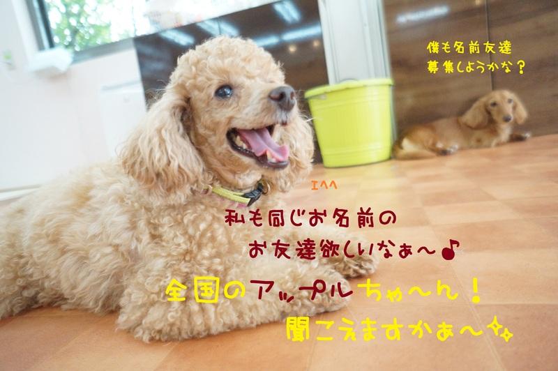d0220513_15425961.jpg