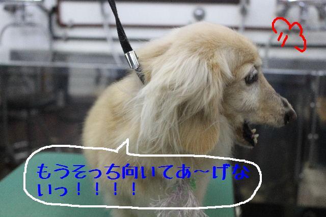 b0130018_16162718.jpg
