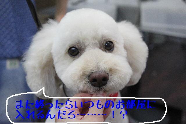 b0130018_16173463.jpg