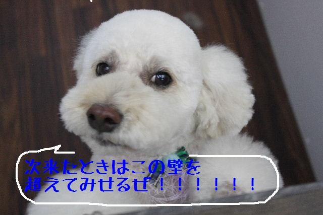 b0130018_16175162.jpg