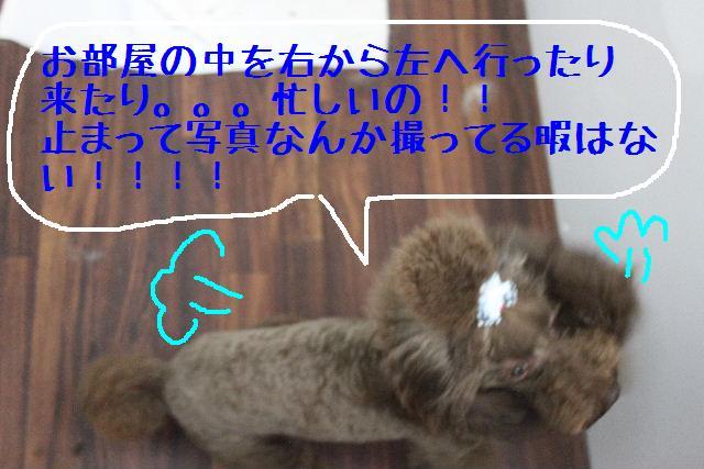 b0130018_16301720.jpg