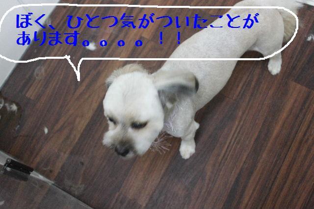 b0130018_16343681.jpg