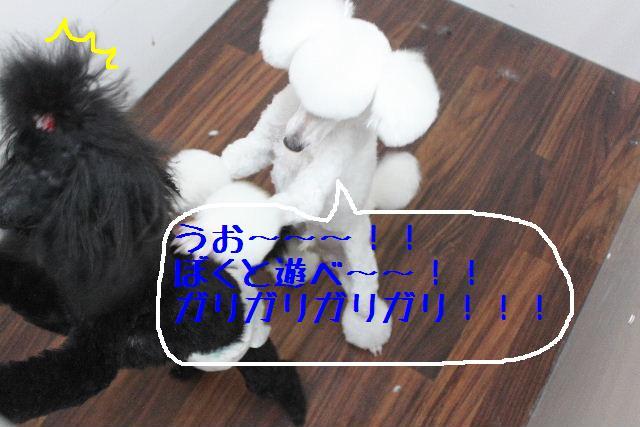 b0130018_16501445.jpg