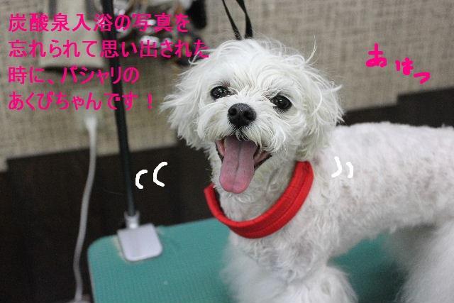 b0130018_2672.jpg