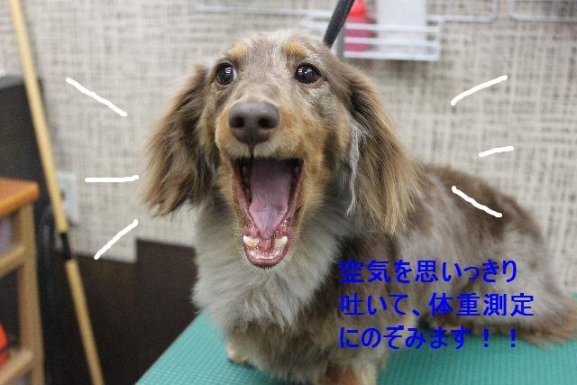 b0130018_9203553.jpg