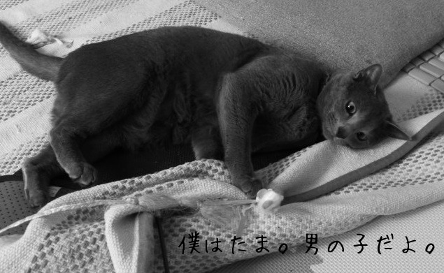 お留守番 にゃんこ ギャラリー【たまちゃん】モノクロ編_e0237625_21574377.jpg