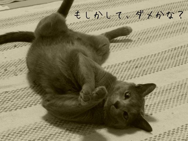 お留守番 にゃんこ ギャラリー【たまちゃん】モノクロ編_e0237625_221343.jpg