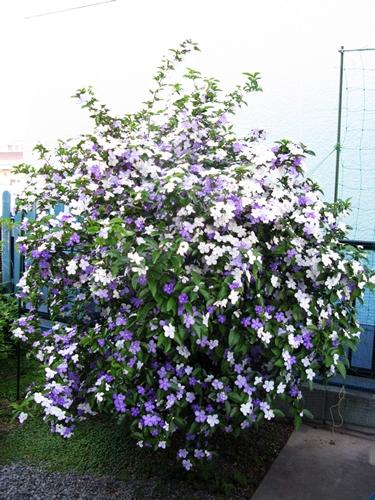 花の色は 移りにけりな ・・・・_f0129726_22142853.jpg