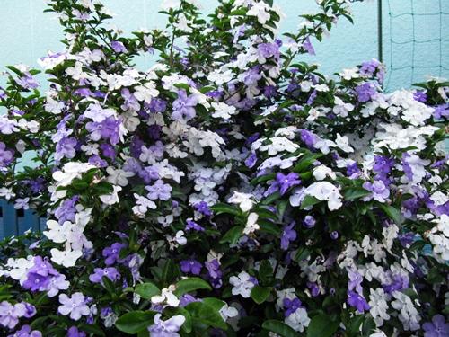 花の色は 移りにけりな ・・・・_f0129726_22184521.jpg