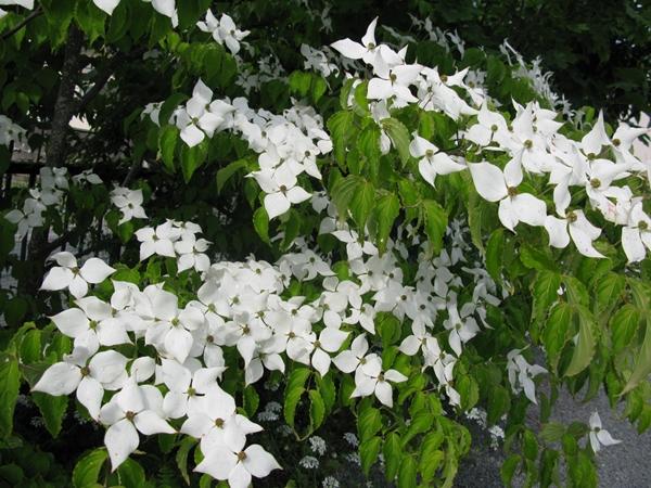 花の色は 移りにけりな ・・・・_f0129726_22194476.jpg