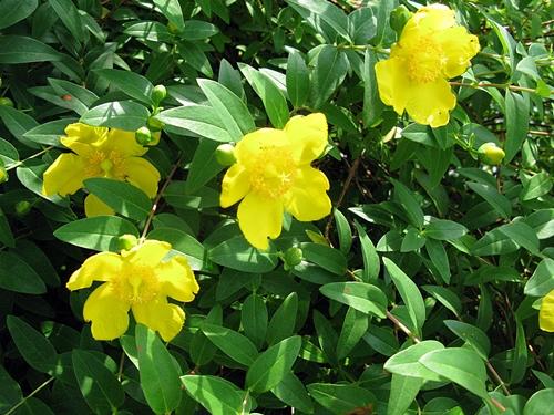 花の色は 移りにけりな ・・・・_f0129726_22221286.jpg