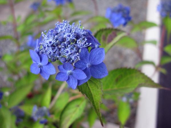 花の色は 移りにけりな ・・・・_f0129726_22313248.jpg