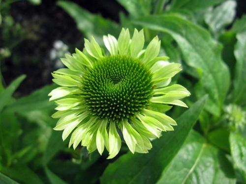 花の色は 移りにけりな ・・・・_f0129726_22442949.jpg