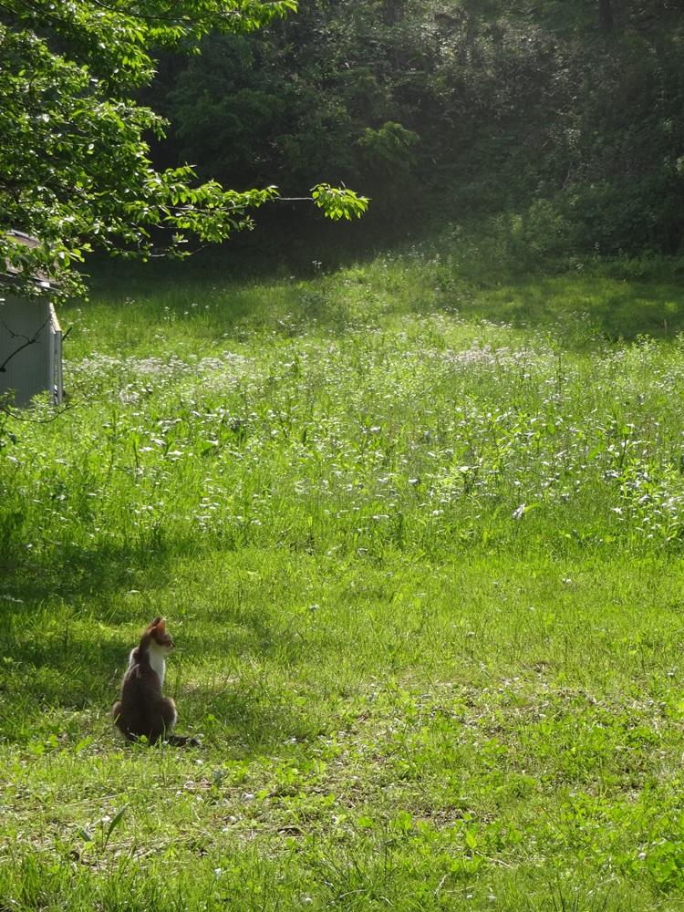草刈り_c0111229_18595691.jpg
