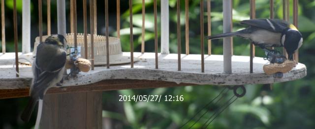 b0197433_230510.jpg