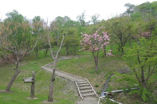 薬用植物園へ_f0231042_203289.jpg