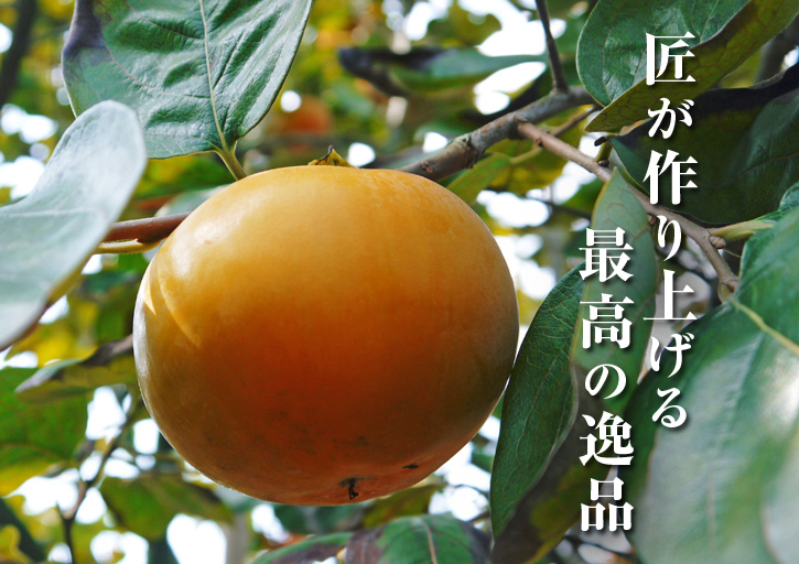 太秋柿 古川果樹園 柿の花と惜しまぬ手間ひまのお話_a0254656_18594067.jpg