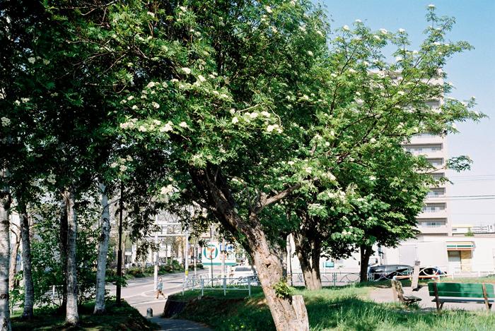 ナナカマドの花_c0182775_19483466.jpg