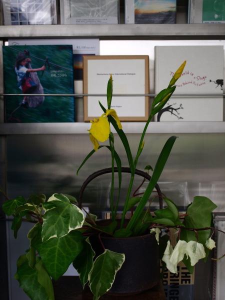 花とファッション キショウブ(イエローアイリス)とuemulo munenoliのブラウス_e0122680_20115851.jpg
