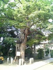 大田区矢口1丁目 ◇新田神社◇_e0254682_16290755.jpg