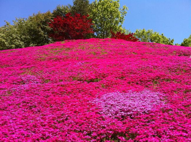 """2014年5月 『5月の札幌』 May 2014 \""""Sapporo in May\""""_c0219616_1692966.jpg"""