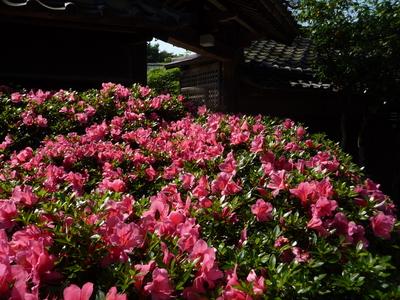 ~ 庭園の花々 ~_e0135219_15305228.jpg