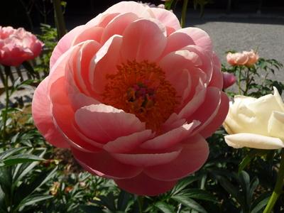 ~ 庭園の花々 ~_e0135219_15311124.jpg