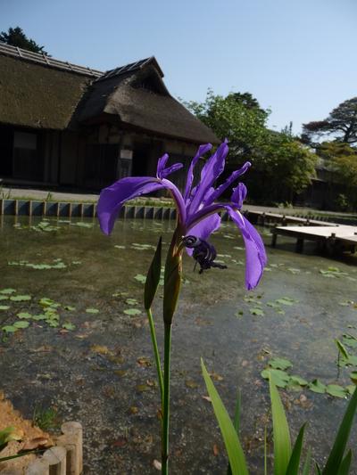 ~ 庭園の花々 ~_e0135219_1531282.jpg