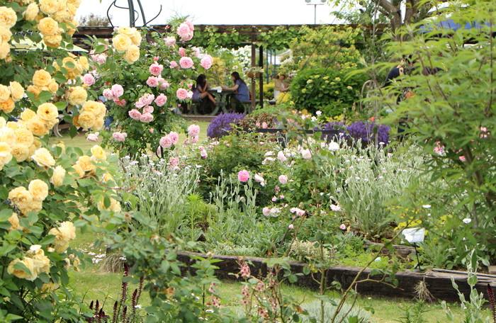 「美野里 フェイバリット ガーデン」  & 素晴らしいイングリッシュ・ガーデン O邸 _d0150720_14174512.jpg