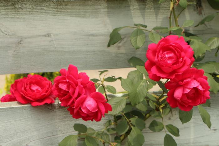 「美野里 フェイバリット ガーデン」  & 素晴らしいイングリッシュ・ガーデン O邸 _d0150720_14185836.jpg