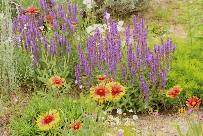 「美野里 フェイバリット ガーデン」  & 素晴らしいイングリッシュ・ガーデン O邸 _d0150720_14285148.jpg