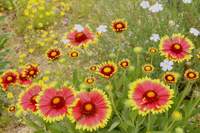 「美野里 フェイバリット ガーデン」  & 素晴らしいイングリッシュ・ガーデン O邸 _d0150720_14312695.jpg