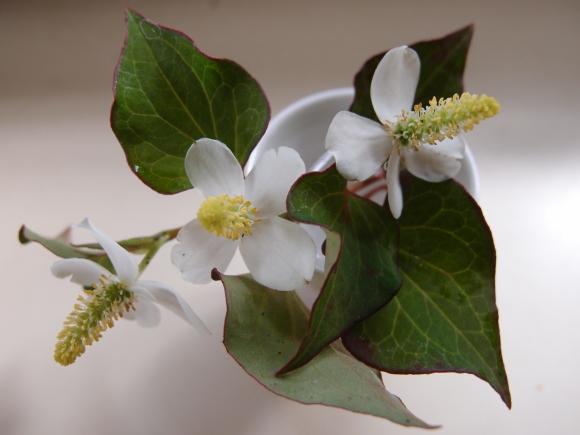 白い花♪_f0158364_09191098.jpg