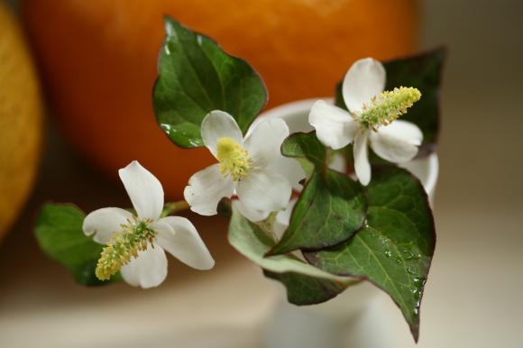 白い花♪_f0158364_09192614.jpg