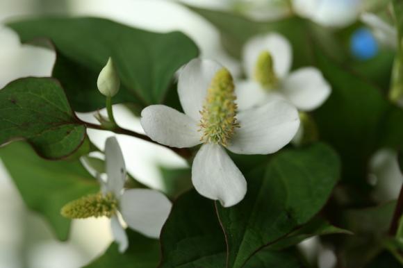 白い花♪_f0158364_09193836.jpg