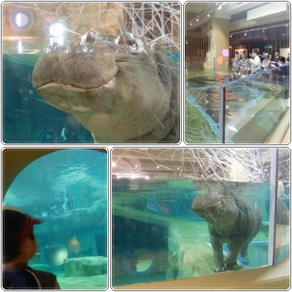 旭山動物園・カバ館_b0236665_22545996.jpg