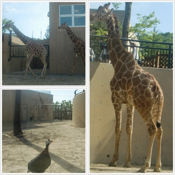 旭山動物園・カバ館_b0236665_2333797.jpg